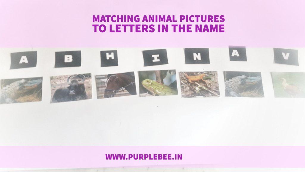 matching animal pics